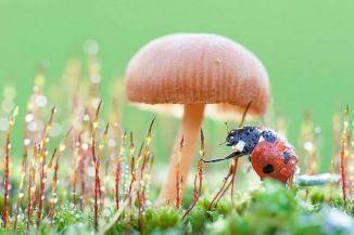 ladybugs-macro-photography-1